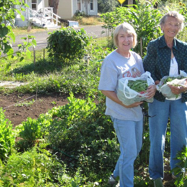 Ladies harvesting green beans in the community garden