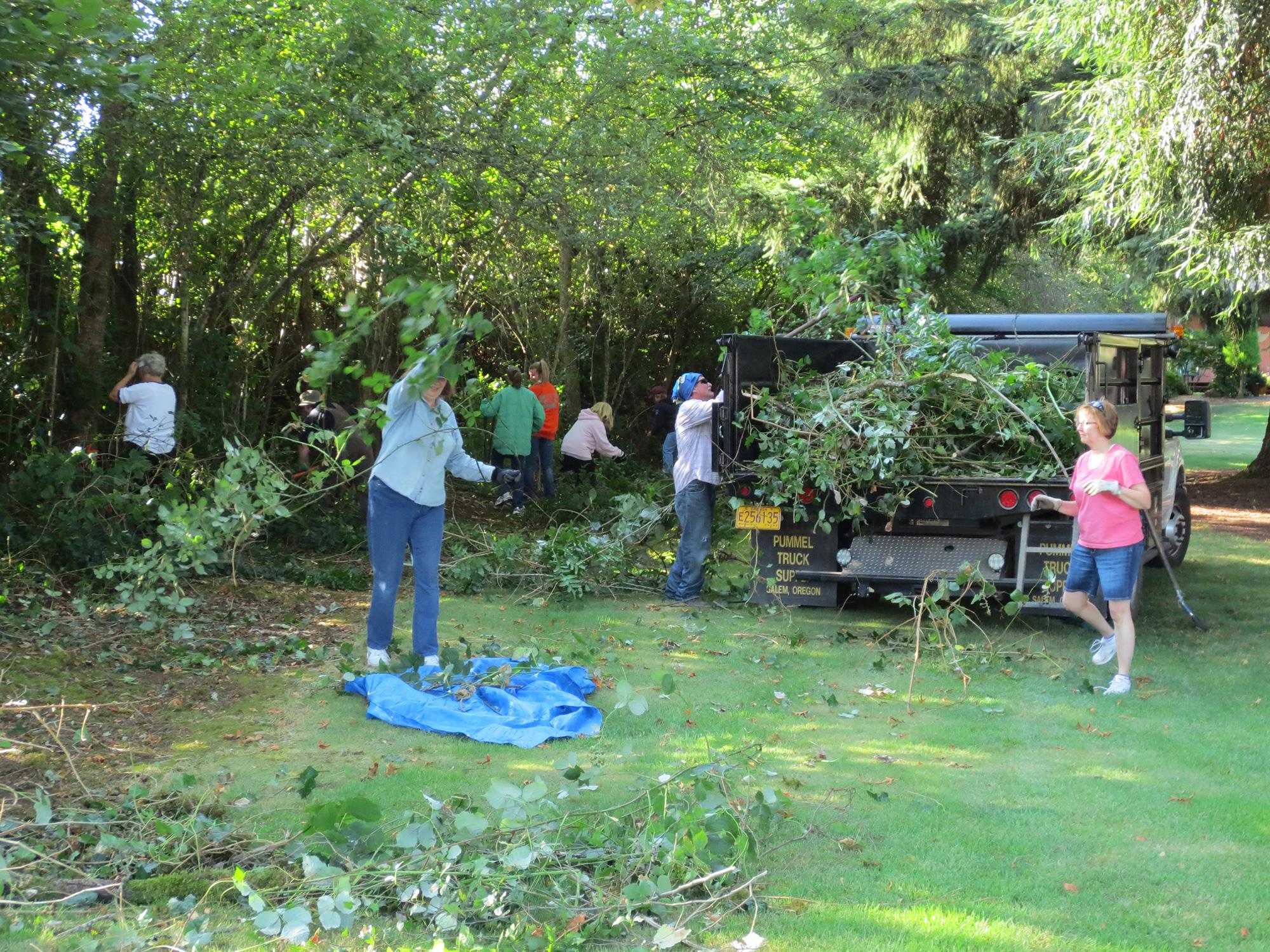 Volunteers pruning trees